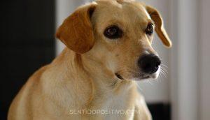 Perros y depresión: las 7 principales razas de perros para personas que luchan contra la depresión