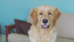 Muerte de un perro: 5 razones por las que perder un perro puede ser tan difícil como perder a un ser querido